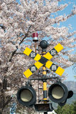 Spring Blossom jinhae railway crossing sign Korea Royalty Free Stock Image