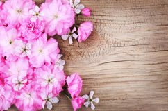 Spring Blossom on Old Wooden Background. Stock Photography