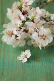 Spring blossom (oriental cherry, apple tree) Royalty Free Stock Photos