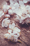 Spring Blossom over wood background Stock Photography