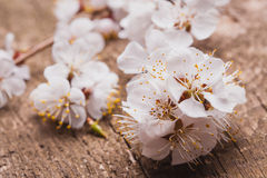 Spring Blossom over wood background Royalty Free Stock Photos