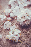 Spring Blossom over wood background Stock Photos