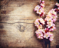 Spring Blossom. Over wooden background royalty free stock photos