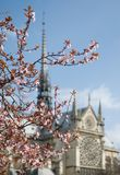 Spring blossom in Paris Royalty Free Stock Image