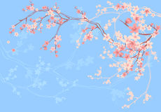 Spring blossom pink and blue background Royalty Free Stock Image