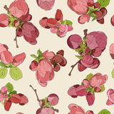 Spring blossom pink flowers pattern background. Drawn beautiful fruit blooming. Spring blossom pink flowers pattern background hand drawn beautiful fruit Royalty Free Stock Image