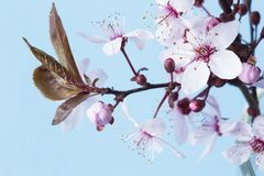 Spring blossom stock photography