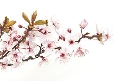 Spring blossom stock photos