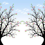 Spring Blossom Tree Royalty Free Stock Image