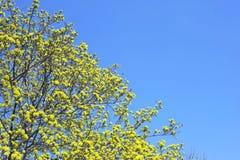 Spring blossom,trees. Stock Photo