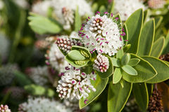Spring blossom. White flower in Spring season Royalty Free Stock Photography