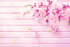 Spring blossom on white wooden plank background Royalty Free Stock Photo