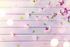 Spring blossom on white wooden plank background Royalty Free Stock Photography