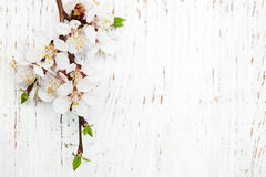 Spring blossom on wood background Royalty Free Stock Photos