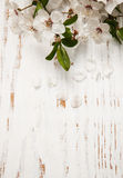 Spring blossom on wood background Stock Image