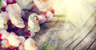 Spring blossom on wooden background Stock Images