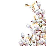 Spring, blossoming pussy-willow ,  watercolor. Spring blossoming pussy-willow  watercolor, pattern Royalty Free Stock Image