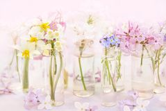 Spring blossoming/springtime blooming flowers on pink pastel background royalty free stock photos