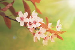 Spring blossoming in sunlight Stock Photography