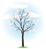 Spring blossoming tree Stock Photo