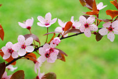 Spring blossoming Stock Photos