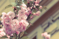 Spring blossoming tree retro colors spring time. Stock Image