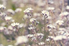 Spring blossoming wildflowers Royalty Free Stock Image