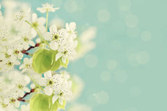 Spring Blossoms Stock Photography