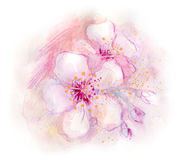Spring Blossoms. Watercolor painting of plum tree blossoms in spring Royalty Free Stock Photos