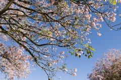 Spring blossoms Stock Photos