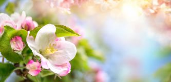 Spring blossoms background in beautiful colors royalty free stock photo