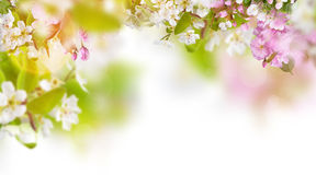 Spring blossoms background Stock Images