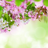 Spring blossoms background Stock Photography