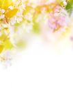 Spring blossoms background Stock Photo