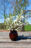 Spring blossoms in a clay vase Stock Images
