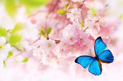 Spring blossoms with exotic butterfly. Free space for text stock image