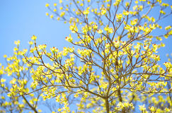 Spring Blossoms. Green Flowers on the Tree Outside Royalty Free Stock Images