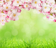 Spring blossoms. With green grass background. Free space for text Stock Photos