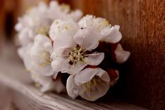 Spring. Blossoms off a tree Royalty Free Stock Photos