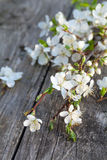 Spring blossoms on old wooden surface Royalty Free Stock Image