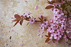 Spring Blossoms on a Stone Background Stock Photos