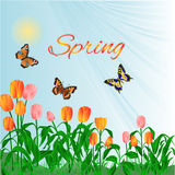 Spring  blossoms tulips and butterflies vector Royalty Free Stock Images
