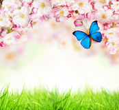 Spring blossoms on white background Royalty Free Stock Photos