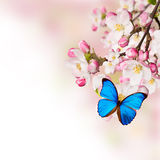 Spring blossoms on white background Royalty Free Stock Photo