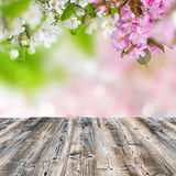 Spring blossoms with wooden table Royalty Free Stock Photos