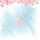 Spring blue background with cherry blossom vector Royalty Free Stock Photos