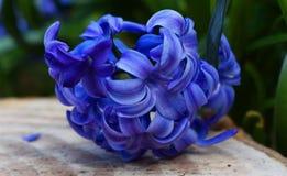 Spring at Oxford royalty free stock photos