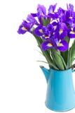 Spring blue irises Royalty Free Stock Photography