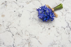 Spring blue wild flowers Scilla bouquet on Delta White quartz co. Spring blue wild flowers Scilla bouquet on Delta White quartz kitchen worktop Royalty Free Stock Photo