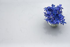 Spring blue wild flowers Scilla in vase on Noble Carrara quartz. Counter kitchen worktop Stock Photo